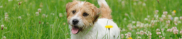 PSSTT… do you want your dog and cat to thrive, not just survive?